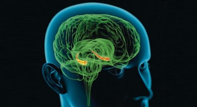 Ученые изучили реакцию мозга на телепортацию