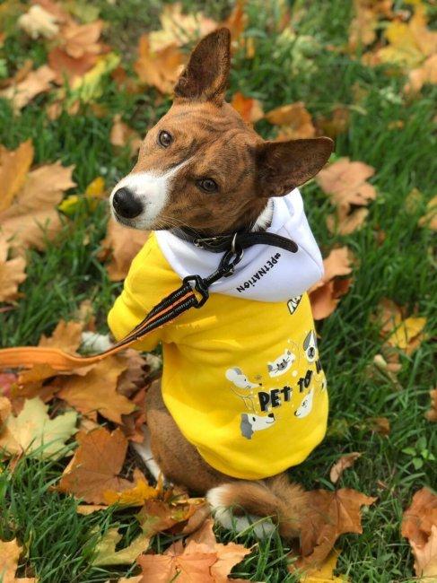 NAVI представили мерч для домашних животных